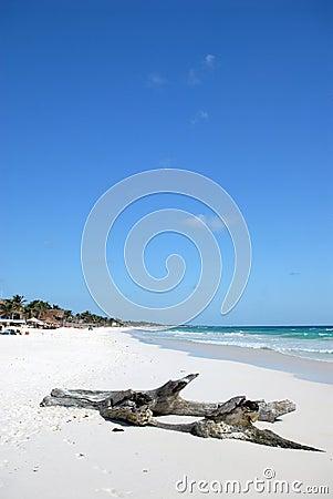 Driftwood on paradise beach
