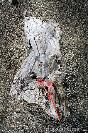 Driftwood with red thistle