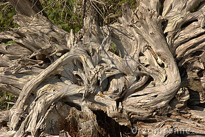 Driftwood Stump Texture