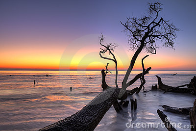 Driftwood and sunrise hdr