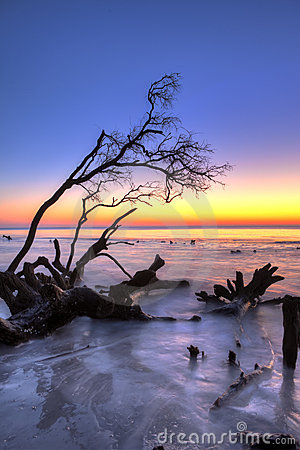 Driftwood and sunrise hdr