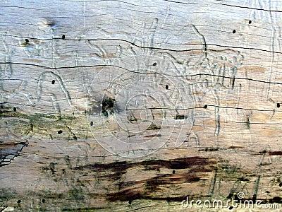 Driftwood Texture 1
