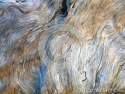 Driftwood Texture 2