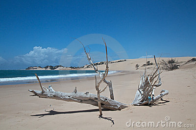 Driftwood on tropical beach