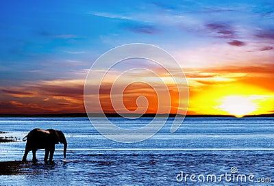 Drinking elephant silhouette