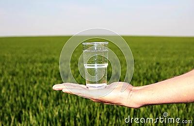 Drinking water grassland