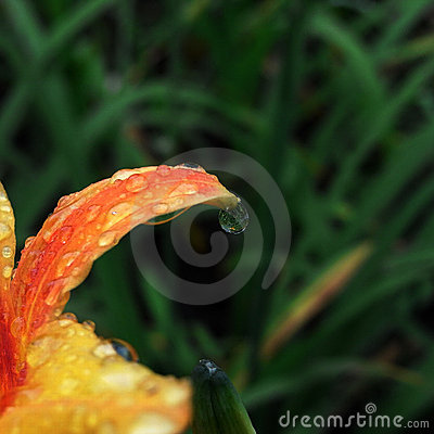 drip Flower after rain