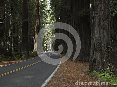 Drive through the California Redwoods