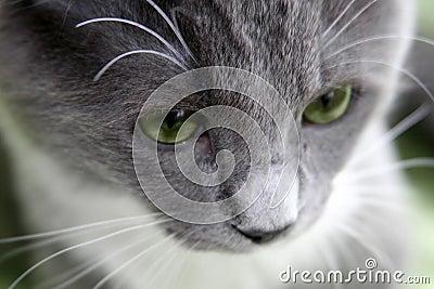 Droevige kat