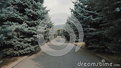 Droga między drzewami świerkowymi zbiory wideo