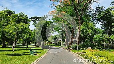 Droga w parku na jaskrawym dniu zbiory wideo