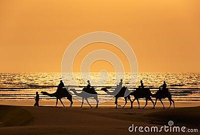 Dromedary τουρίστες silhoutte