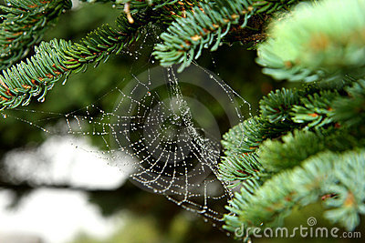 Drop of condensation on the spider-web