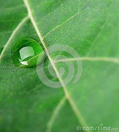 A drop of dew on a leaf