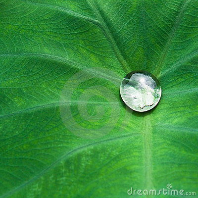 Drop on leaf