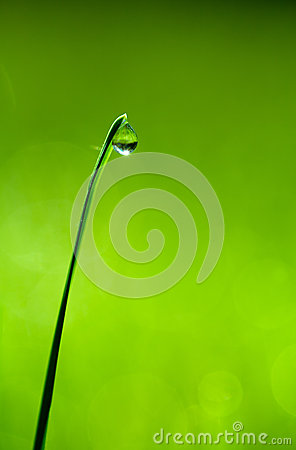 Free Drop On A Blade Of Grass Stock Image - 26860771