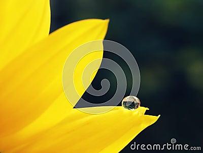 Drop in a petal