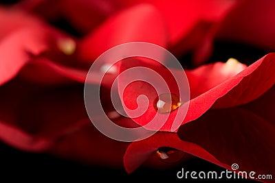 Drop on petal
