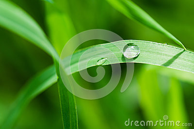 A droplet on a grass blade
