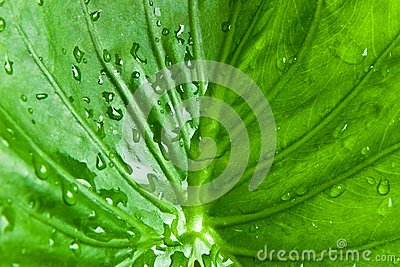 Droplet on green leaf