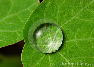 Droplet On Leaf Stock Image - Image: 19484271