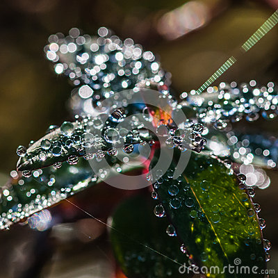 Droplet Multitude