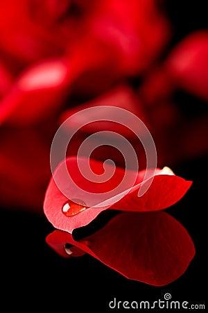Droplet on petal