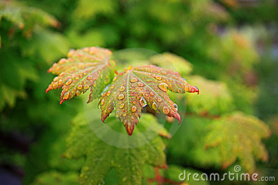 Droplets on green vegetation