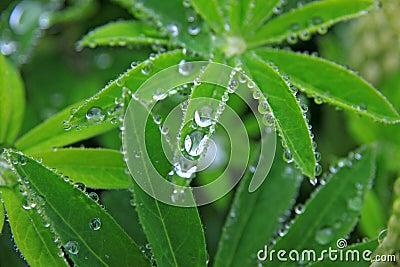 Droplets on green vegetation