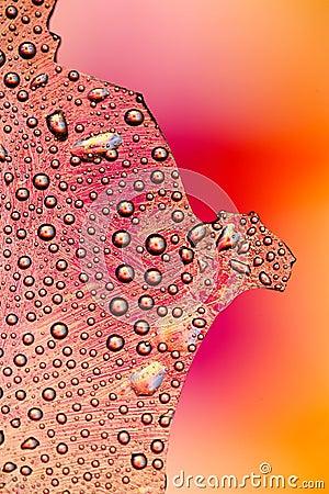 Drops in Color