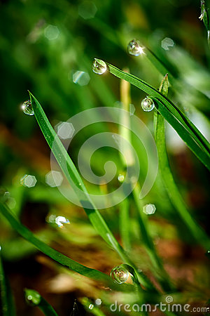 Drops of dew on the green grass