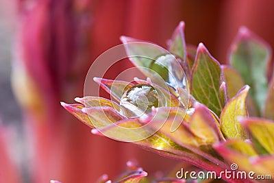 Drops ón petals