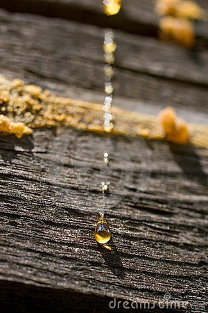 Free Drops Of Resin On Wooden Wall Stock Photography - 5647142