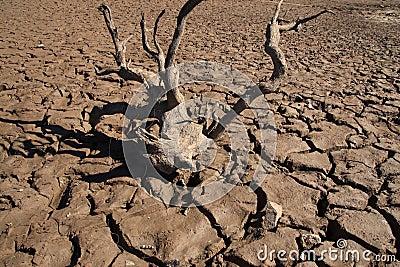 Drought Cracks