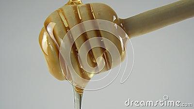Druipende honings witte backround stock footage