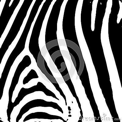 Druk zebra