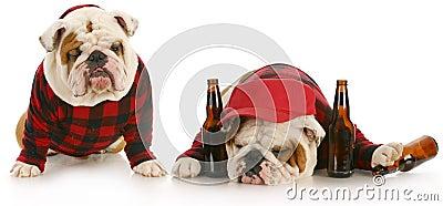 Drunk as a dog