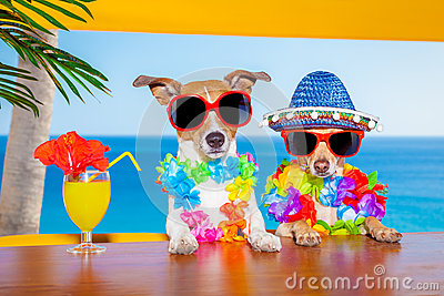 Drunk cocktail dogs stock photo image 54849465 for Cool vacations for couples