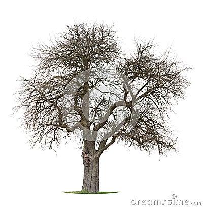 Free Dry Apple Tree Stock Photos - 8818343