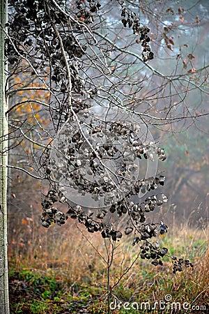 Dry aspen leaves