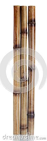 Free Dry Bamboo Sticks Stock Image - 25829041