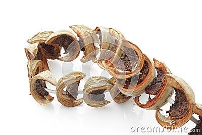 Dry betal palm / dry betal nut fruit