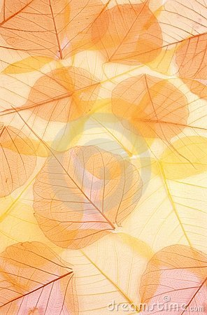 Free Dry Colored Leaves - Background Royalty Free Stock Photos - 7979538