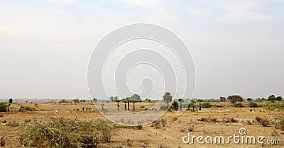 Dry Season Myanmar Landscape