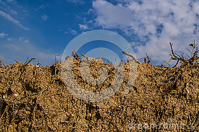 Dry earth ground