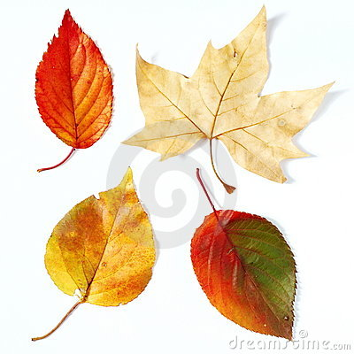 Free Dry Fall Leaves Stock Images - 15146004