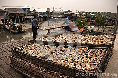 Dry fish Editorial Image