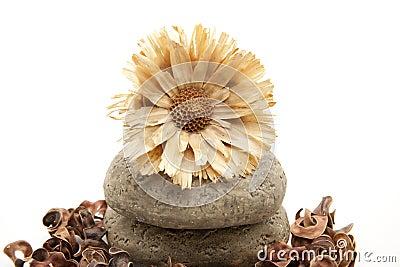 Dry flower on stone