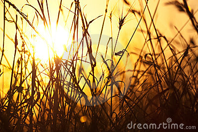 Dry grass and sun