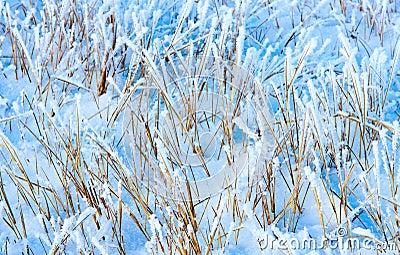 Dry grass under snow